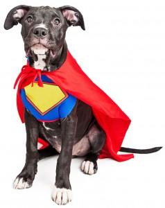 superdog-238x300